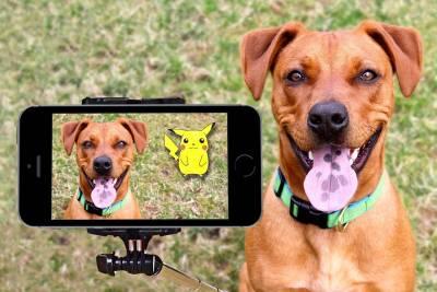 Dog and Pikachu On Pokemon Go AR game